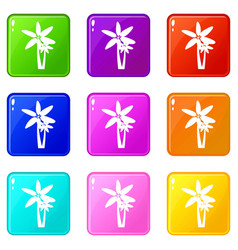 Two palm trees icons 9 set vector