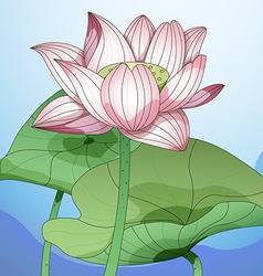 Lotus1 vector