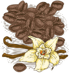 Vanilla flower with two sticks and coffee beans vector