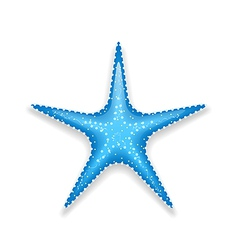 Blue starfish isolated on white background vector