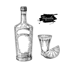 Tequila bottle and shot glass with lime mexican vector