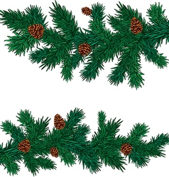 Some green spruce branches with cones vector