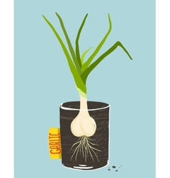 Growing garlic with green leafy top in mug vector