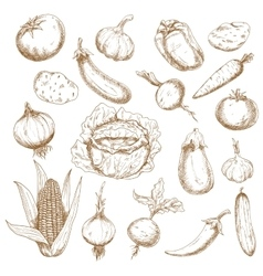 Retro sketches of autumn harvest vegetables vector