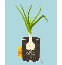 Growing Garlic with Green Leafy Top in Mug vector image vector image