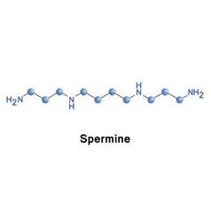 Spermine is a polyamine vector
