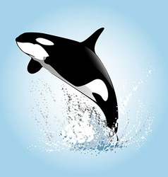 A leaping orcas vector