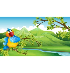 A parrot in front of the high mountains vector image