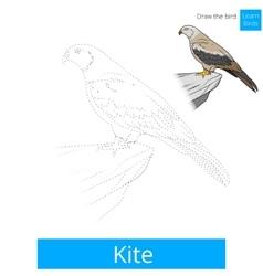 Kite bird learn birds coloring book vector image