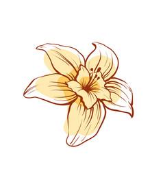 Vanilla flower isolated icon vector