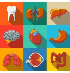 Internal human organs flat long shadow icons set vector
