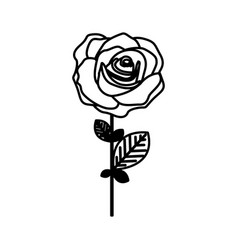 Figure rose with petals and leaves icon vector