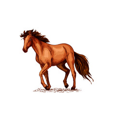Horse sketch of brown mustang stallion vector