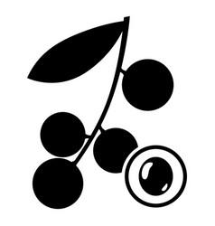 Longan fruit image vector