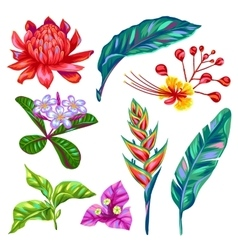 Set of thailand flowers tropical multicolor vector