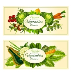 Vegetables fruits and salad greens banners set vector image vector image