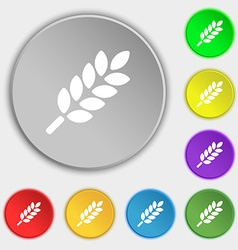 Wheat ears icon sign symbol on eight flat buttons vector