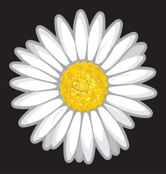 Daisy flower isolated on black vector image vector image