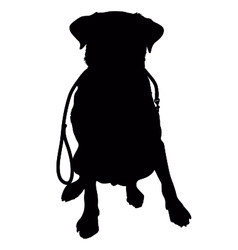 Labrador Retriever Leash Silhouette vector image