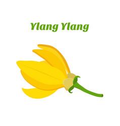 Tropical flower - ylang-ylang cananga vector
