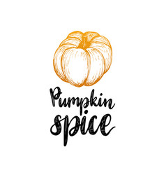 Pumpkin spice lettering on white background hand vector
