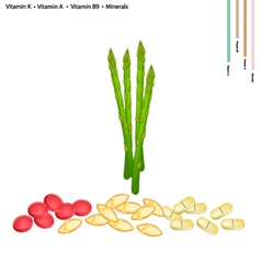 Asparagus with vitamin k a and b9 vector