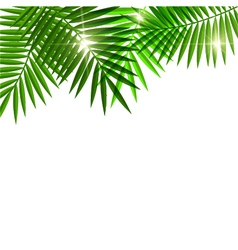 Leaves of palm tree vector