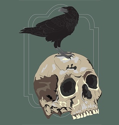 Black raven sitting on skull - vector