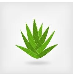 Green aloe vera vector