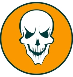 Human white skull vector