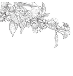 Vintage hand drawn blooming apple tree twig vector image vector image