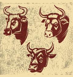 bull heads emblems on grunge background design vector image