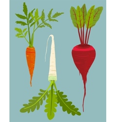 Growing root vegetables set with green leafy top vector