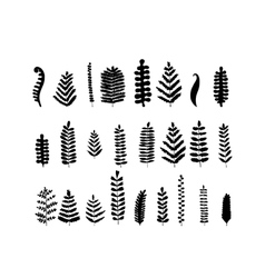 Leaf set sketch for your design vector