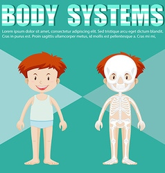 Body system of boy and girl vector image