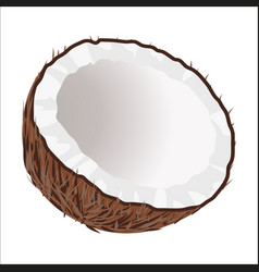 Half of coconut tropical nut isolated vector