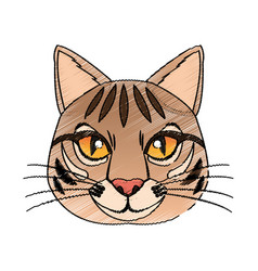 Cat house pet icon image vector