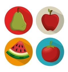 Collection fresh apple tomato watermelon and pear vector