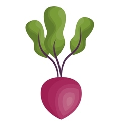 Fresh beet vegetable isolated icon vector