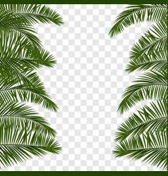 Summer green palm leaf transparent vector