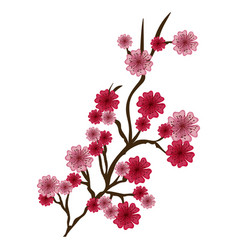 branch with flowers of japanese cherry tree in vector image