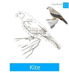 Kite bird learn birds coloring book vector