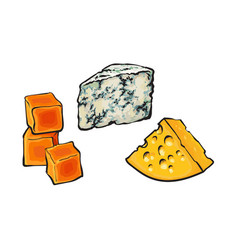 Sketch blue cheddar and emmental cheeses vector