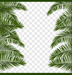summer green palm leaf transparent vector image vector image