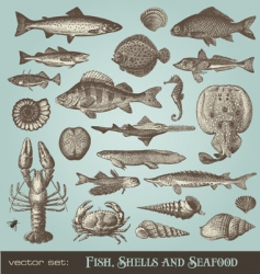 Set fish shells and seafood vector