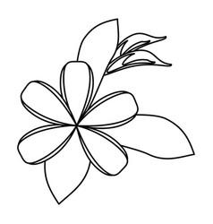 Plumeria flower decoration thin line vector