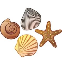 Sea cockleshell vector image vector image