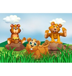 Three bears in the field vector image vector image