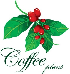 Coffee plant vector