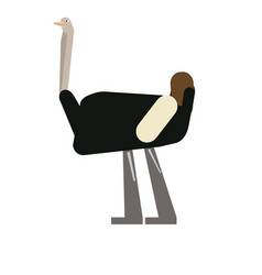 Isolated abstract ostrich vector